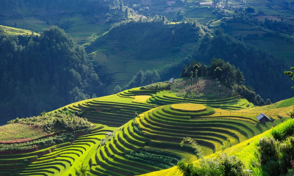 Vietnam travel tips. Questions and answers about Vietnam.
